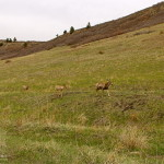 Mule Deer in Roxborough State Park